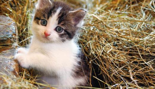 札幌三越で「岩合光昭写真展 こねこ」開催 期間中、その他各階で猫グッズ展開も