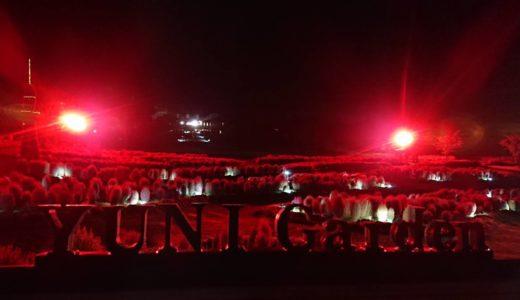 ゆにガーデンで赤く色付くコキアが見頃を迎える。夜にはライトアップも実施