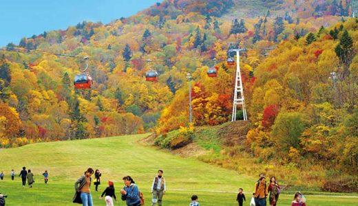 札幌国際スキー場で秋の味覚祭開催 ゴンドラに乗って紅葉も一望
